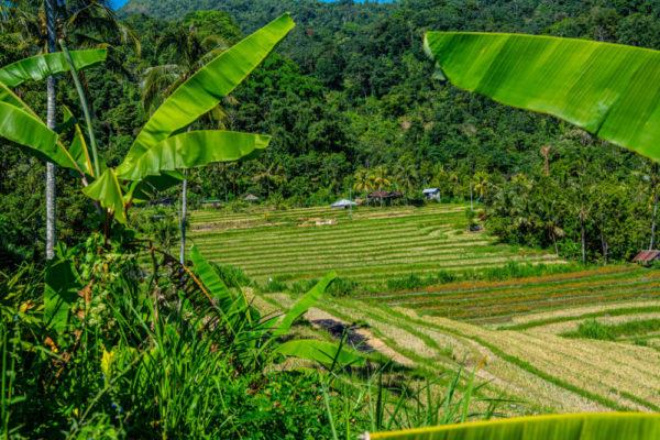 Indonesien rejse - højskole